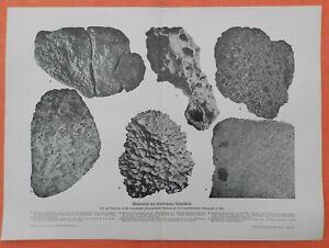 Meteoreisen von verschiedenen Fundstätten  nach Foto  Druck von 1903