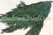 PRESERVED DRIED DARK GREEN CEDAR FLORAL FOLIAGE FILLER FLOWER