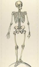 Framed Print - Vintage Antique View of The Human Skeleton (Picture Medical Art)