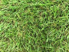 Cultivated Turf