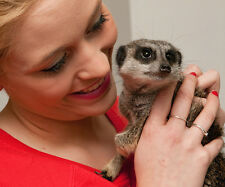 Meet the Meerkats for Two - Greet & Feed Meerkats - SAVE £20 - valid 9+ months
