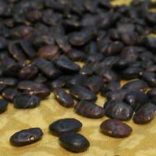 San Pablo Balleza Tepary Bean 5+ seeds