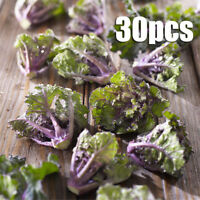 30Pcs Finest Vegetable Flower Sprouts Cross with Curly Kale Brussel Sprout Seeds