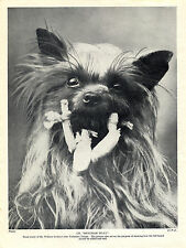 YORKSHIRE TERRIER HEAD STUDY NAMED CHAMPION DOG LOVELY OLD 1934 DOG PRINT