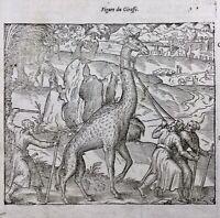 Hulpalim Babouin 1614 Ethiopie Oiseau de Paradis Girafe Gravure Ambroise Paré