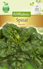 Espinacas 'Matador' - Spinacia Oleracea, otoño & frühjahrsanbau Semillas 4232