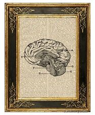Brain Art Print on Vintage Book Page Medical Anatomy Illustration Home Decor