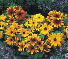 Mezcla de semillas de Flores Anuales enanas - 1 gramo