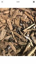 New listing 35 Pill Bugs-Live Isopods