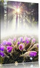 Pixxprint Blooming Lilac Flowers in Forest Graphic Art Print on Canvas 60cmx40cm
