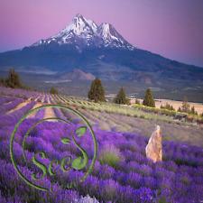 50Pcs Lavender English Seeds Organic Bonsai Herb Garden Decor Home Purple Plant