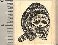 Raccoon Rubber Stamp, North American Racoon, Coon G4006 WM