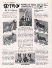 GERMAN SHEPHERD CORGI DOG WORLD 1945 DOG BREED KENNEL ADVERT PRINT PAGE KENTWOOD