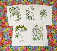 Vintage Botanical Prints Set of 5 1950s Book Plate Plants Prints to Frame