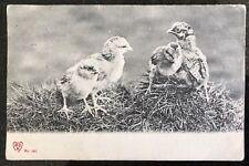 M B M Postcard Birds Chicks posted Edinburgh 1904 posted to Coleraine