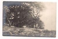 salon 1901  clairière en forêt