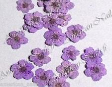 1 boite de Véritables FLEURS SECHEES Violet bijoux déco d'ongles Nail Art