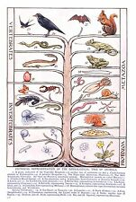 Vertebrates,Invertebrates.Protozoa.Metazoa.1922.Outline of Science.Prof Thomson