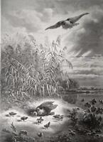 HUNTING Bird of Prey Family Chicks River Bank - 1878 Fine Quality Print