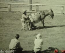 1950 Western Rodeo quarter horse PHOTO Steamboat Springs CO Baggs WY Barrel Race