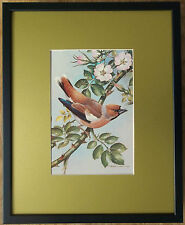 Hawfinch print - Basil Ede print, 20''x16'' frame, bird art