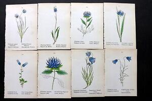 Weber 1880 Lot of 8 Hand Col Botanical Prints. Book Plates