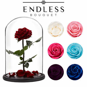 NEW Preserved Rose Enchanted Roses 30cm Glass Dome Beauty and the Beast