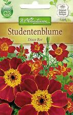 5256 Studentenblume 'Disco Rot' Tagetes patula rostrot, orange Mitte  Samen
