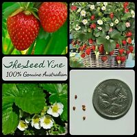 20+ ORGANIC STRAWBERRY SEEDS (Fragaria x ananassa) Sweet NON GMO High Yeilding