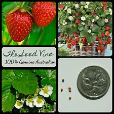 50+ ORGANIC STRAWBERRY SEEDS (Fragaria x ananassa) Sweet HEIRLOOM High Yeilding