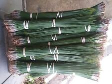 longleaf pine needles green 17lbs 15 to 18 inches  free ship