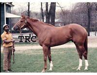 SECRETARIAT & EDDIE SWEAT - ORIGINAL 1972 BELMONT PARK 8X10 CONFORMATION PHOTO!