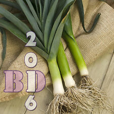 LEEK BULGARIAN GIANT - VERY HARDY - Appx 500 pcs  Seeds - Original Packing_09
