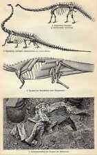 Antique print Fossil Reconstruction Dinosaurs dino 1910