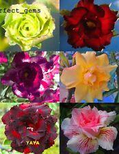 "AMAZING ADENIUM ""Mixed 6 Types"" 6 GRAFTED PLANTS FRESH!"