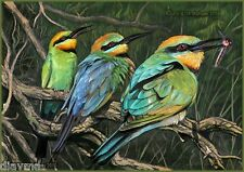 © ART - BIRD 3 Rainbow Bee Eater Animal wildlife Original artist print by Di