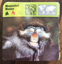 Lot 200+ 1975-1976 Editions Rencontre S.A. Lausanne Flash Cards Animals & More