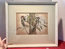 ORIGINAL REX BRASHER-BIRD PRINT -NO.412a- REDNAPE SAPSUCKER