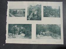 1903 /  Zeitungsdruck 1  / Frettchen Jagd