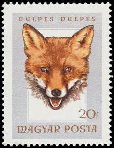 "HUNGARY - 1966 - Hunting Trophies - ""Red Fox"" - MNH Stamp - Scott #1780"