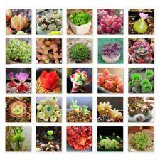 Vogue 500PCS Bulk Mix Lithops Seeds Living Stones Succulent Cactus Organic Decor