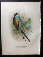 Original Mathews Birds of Australia Hand Coloured Lithograph