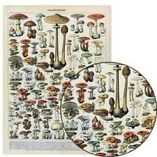 Vintage French Mushroom Chart BOTANICAL MAP Poster Educational Art Print twn
