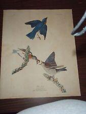 Audubon Blue-bird Sylvia Sialis No 23 Plate CX111 dated 1881 Free Shipping
