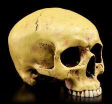 Menschlicher Schädel ohne Unterkiefer - Totenkopf Figur Totenschädel Deko Mayer