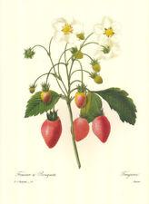"4 Vintage Redoute Botanical Fruit Prints (10"" x 13"") Lot 4246"