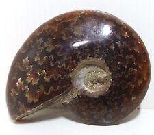 """2.4"""" Pretty Pattern AMMONITE Fossil Madagascar 1.6oz"""