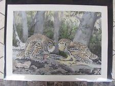 Original  Rex Brasher#373c,373d  Hand Colored Bird Print CA,Ka Owl #373cREX2 DSS