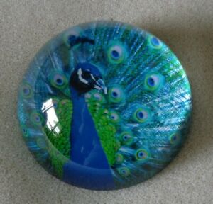 Gorgeous Collectable Art Glass Peacock Paperweight-Felt Bottom-Rare!Hard To Find