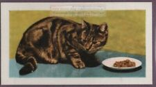 Tabby Cat Feline How To Care For Your Pet Vintage Trade Card